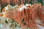 Foto #54474 - Bryce Canyon National Park, Utah.