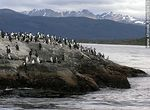 Foto #56873 - Cormorants on an island in the Beagle Channel