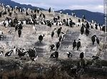Foto #56872 - Cormorants on an island in the Beagle Channel
