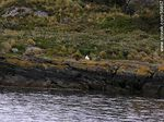 Foto #56867 - Beagle Channel coast