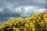 Foto #65971 - Summer storm through the acacias